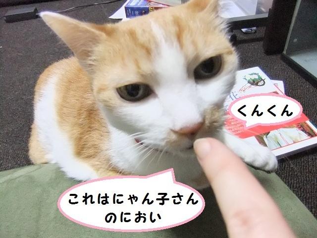匂い 嫌う 猫 が