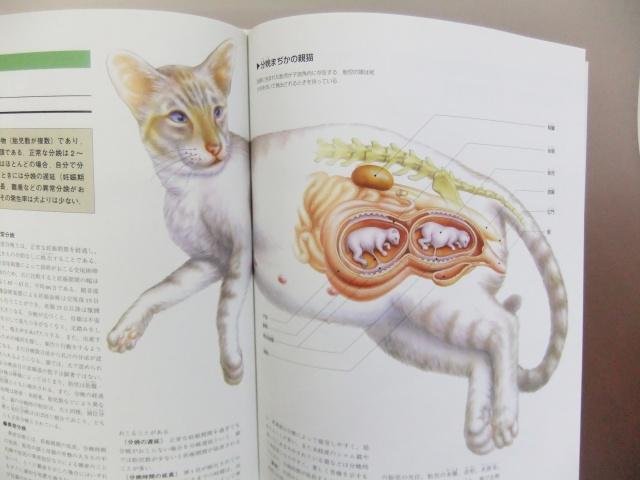 猫の腹の内部 仔猫 猫の病気
