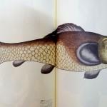SFや神話に登場する不思議な生物の本を、川口市にてお譲りいただきました。