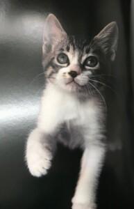 生命 動物 猫 図鑑 出張買取