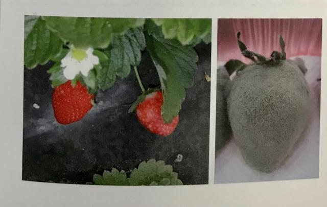 園芸 農学 生物学 専門書 出張買取